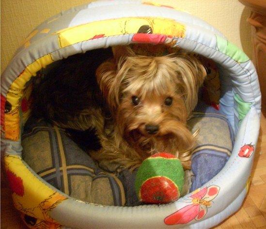 Все для собак: корм, консервы, переноски в зоомагазине Дай Лапу