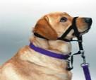 Основные правила при выборе ошейника для собаки