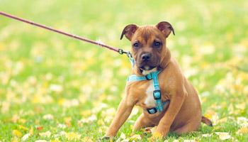 Советы по выбору и использованию ошейников для собак разных пород и размеров